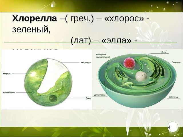 Хлорелла –( греч.) – «хлорос» - зеленый, (лат) – «элла» - маленькая