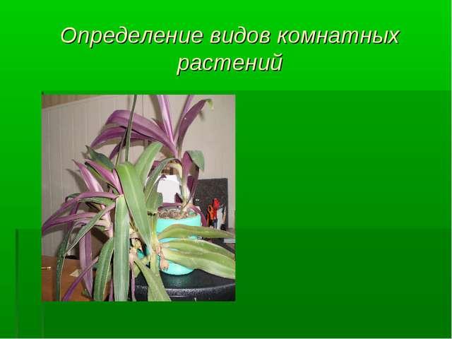 Определение видов комнатных растений