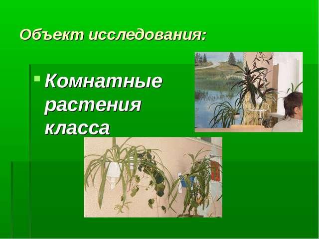 Объект исследования: Комнатные растения класса