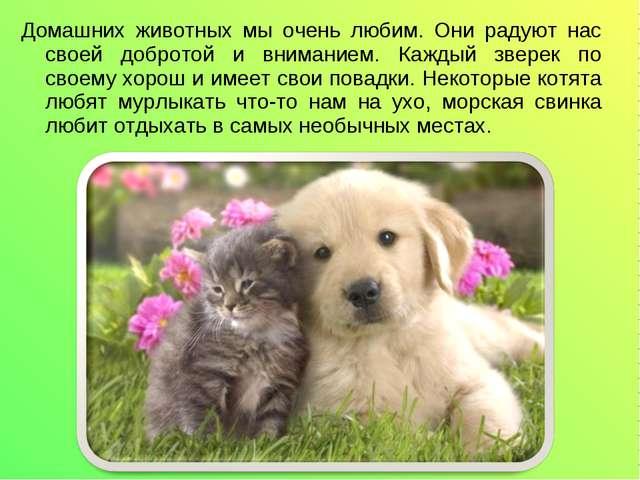 Домашних животных мы очень любим. Они радуют нас своей добротой и вниманием....