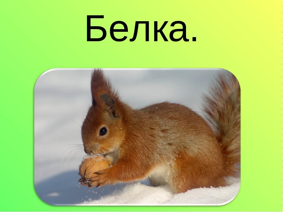 Белка.