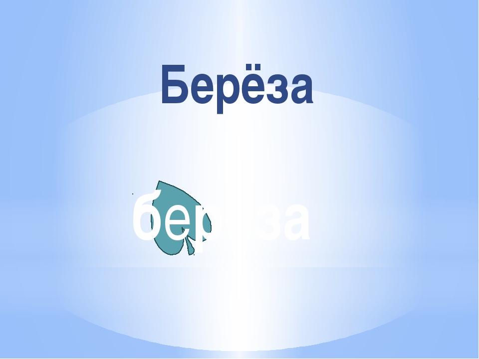 Берёза берёза