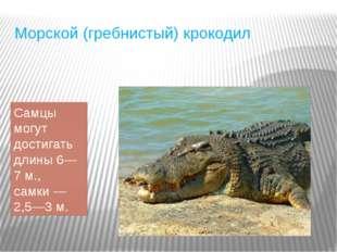Морской (гребнистый) крокодил Самцы могут достигать длины 6—7 м., самки— 2,5