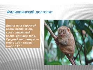 Филиппинский долгопят Длина тела взрослой особи около 10см, хвост, лишённый