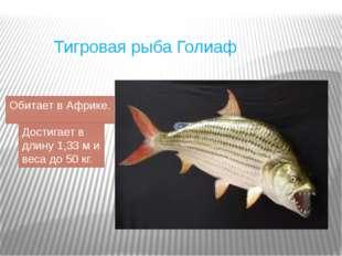 Тигровая рыба Голиаф Обитает в Африке. Достигает в длину 1,33 ми веса до 50