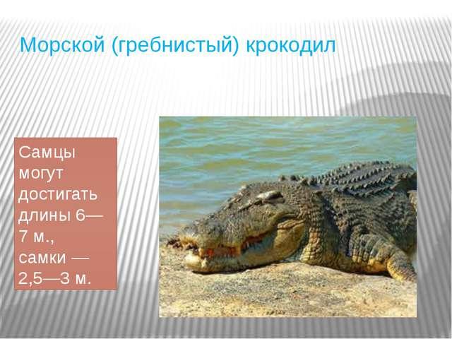 Морской (гребнистый) крокодил Самцы могут достигать длины 6—7 м., самки— 2,5...