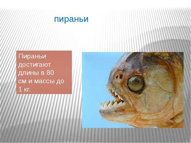 пираньи Пираньи достигают длины в 80 сми массы до 1 кг.