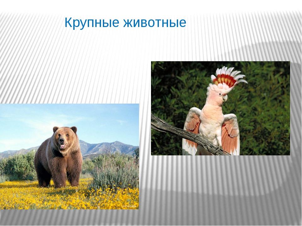 Крупные животные