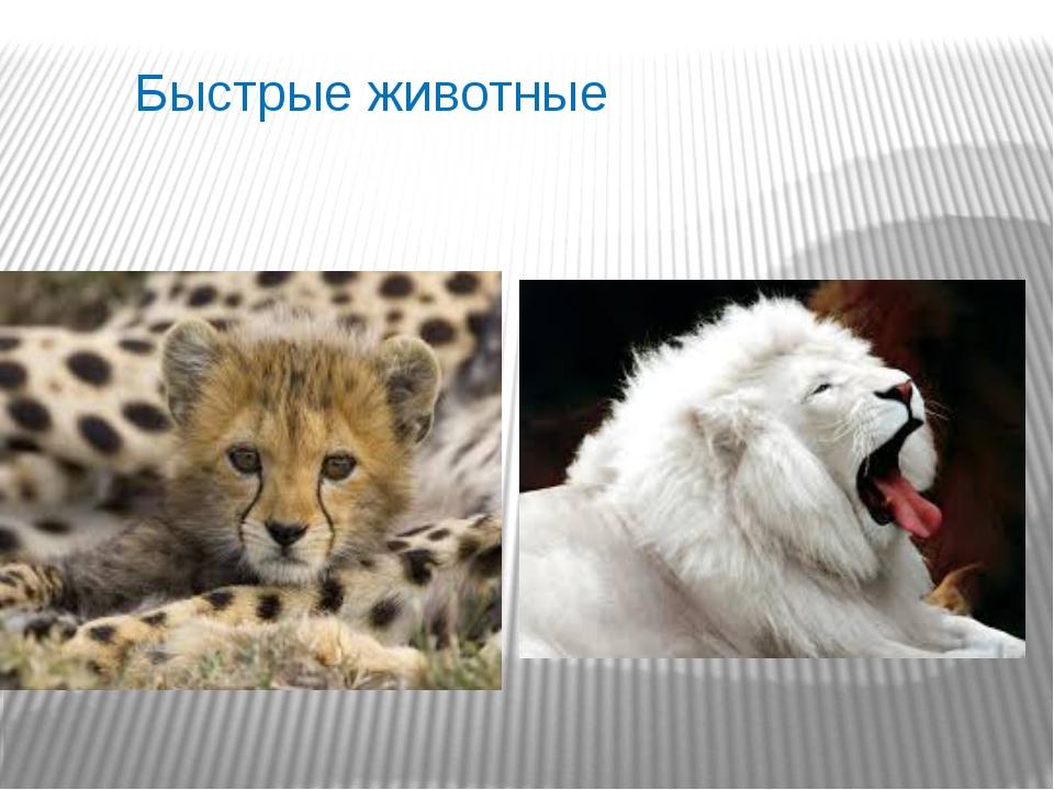 Быстрые животные