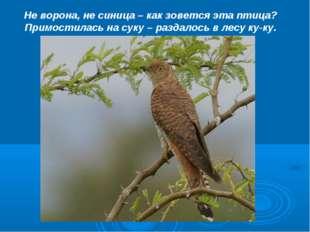Не ворона, не синица – как зовется эта птица? Примостилась на суку – раздалос