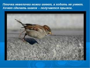 Птичка невеличка ножки имеет, а ходить не умеет. Хочет сделать шажок – получа
