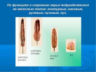 По функциям и строению перья подразделяются не несколько типов: контурные, ма