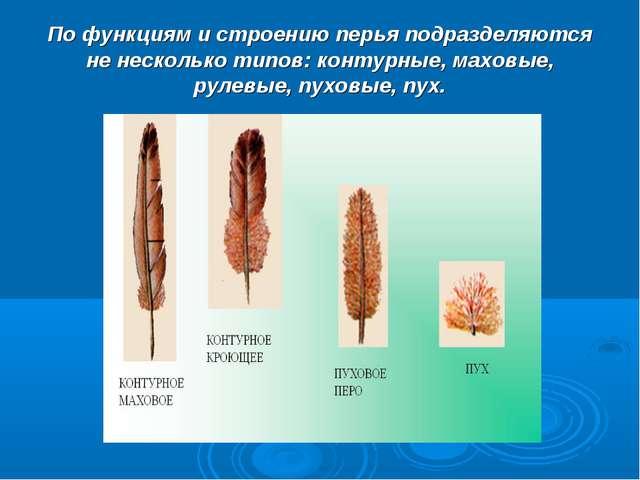 По функциям и строению перья подразделяются не несколько типов: контурные, ма...
