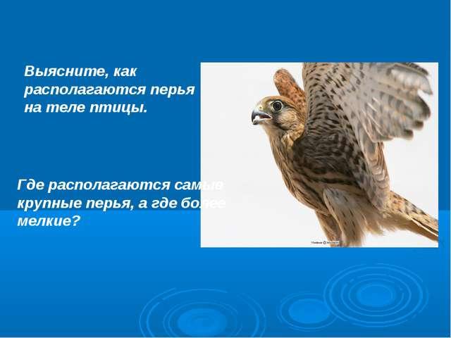 Выясните, как располагаются перья на теле птицы. Где располагаются самые круп...