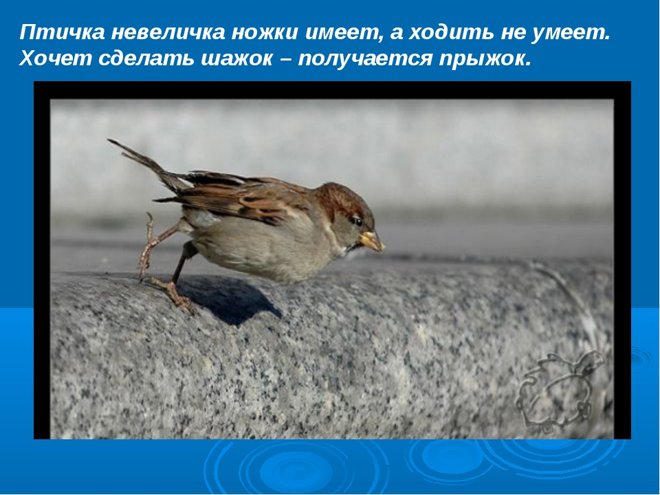 Птичка невеличка ножки имеет, а ходить не умеет. Хочет сделать шажок – получа...