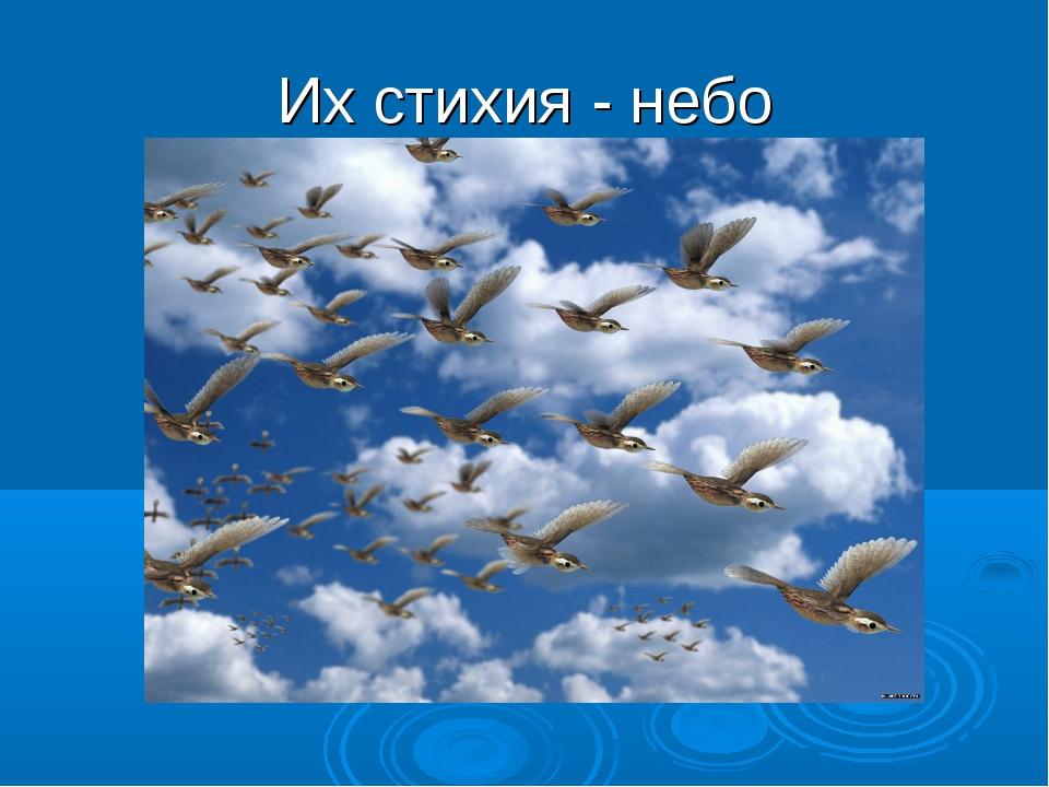 Их стихия - небо