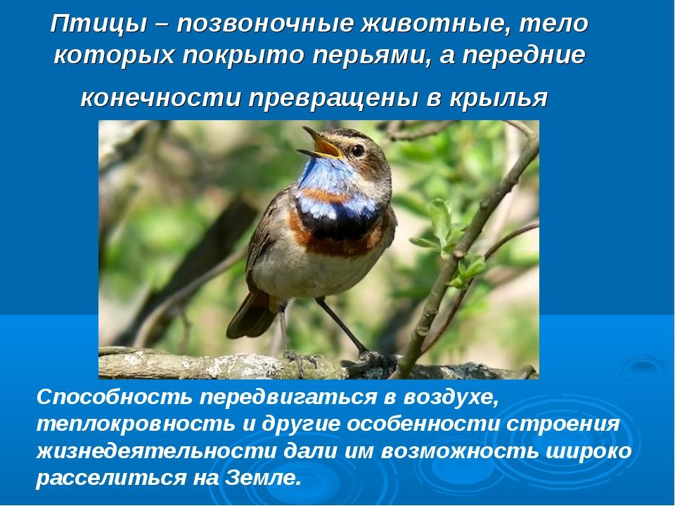 Птицы – позвоночные животные, тело которых покрыто перьями, а передние конечн...