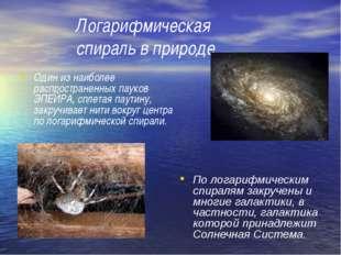 Логарифмическая спираль в природе Один из наиболее распространенных пауков ЭП