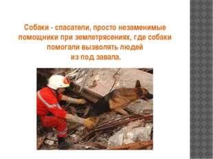 Собаки - спасатели, просто незаменимые помощники при землетрясениях, где соба