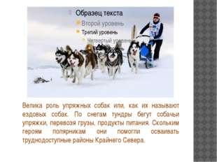 Велика роль упряжных собак или, как их называют ездовых собак. По снегам тун