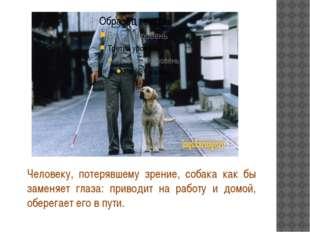 Человеку, потерявшему зрение, собака как бы заменяет глаза: приводит на рабо