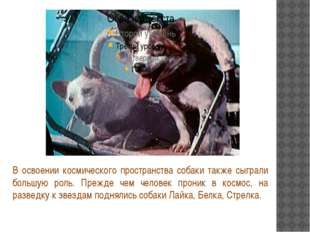 В освоении космического пространства собаки также сыграли большую роль. Преж