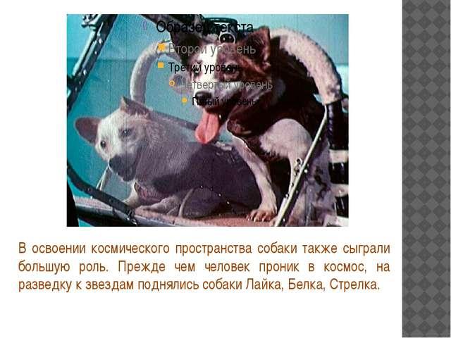 В освоении космического пространства собаки также сыграли большую роль. Преж...
