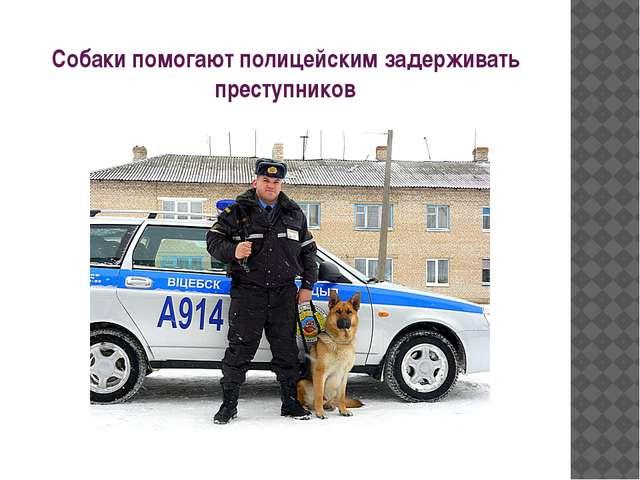 Собаки помогают полицейским задерживать преступников