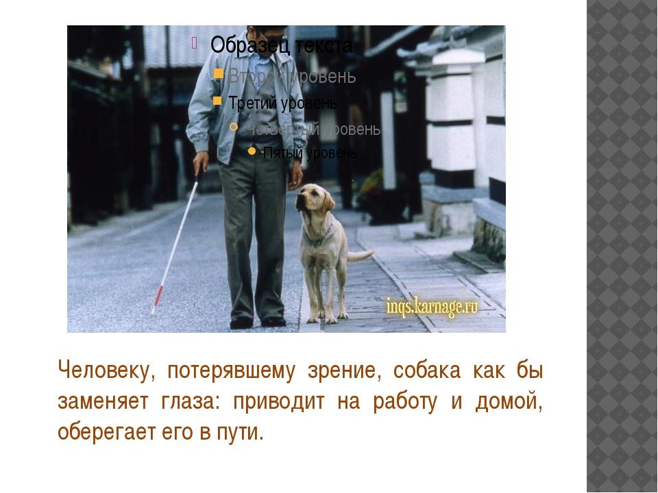 Человеку, потерявшему зрение, собака как бы заменяет глаза: приводит на рабо...