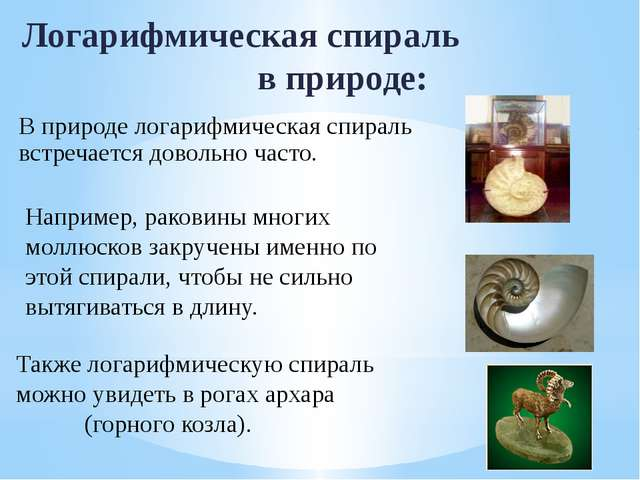 Логарифмическая спираль в природе: Например, раковины многих моллюсков закруч...