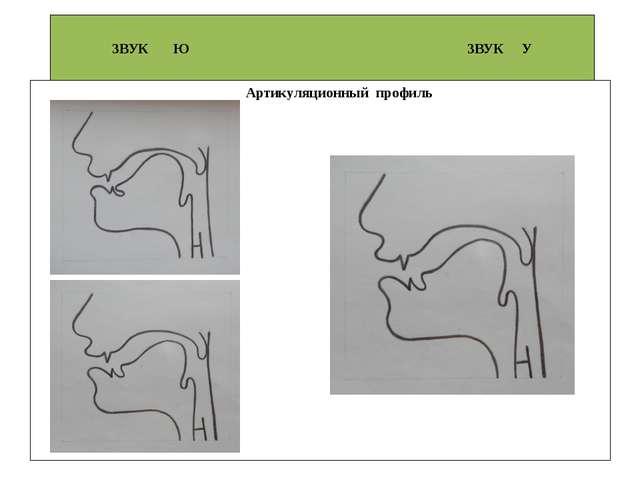 ЗВУК Ю ЗВУК У Артикуляционный профиль