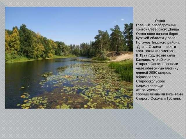 Оскол Главный левобережный приток Северского Донца Оскол свое начало берет в...