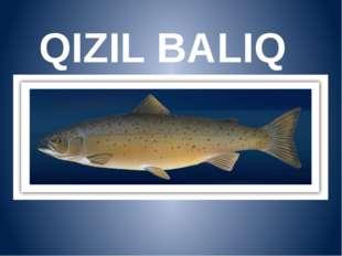 QIZIL BALIQ