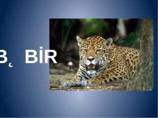 BƏBİR
