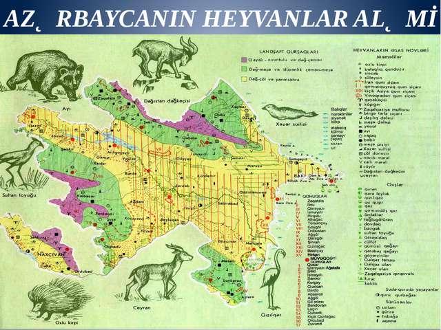 AZƏRBAYCANIN HEYVANLAR ALƏMİ