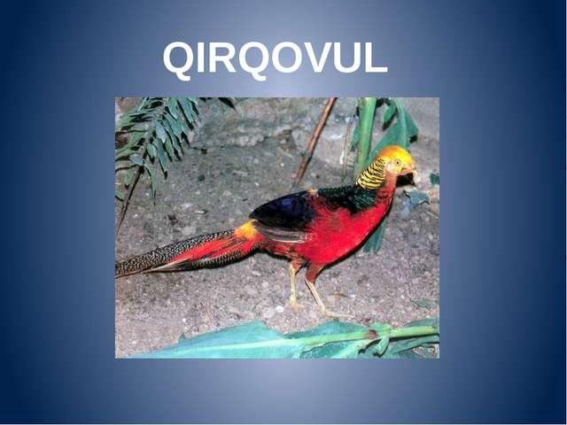 QIRQOVUL