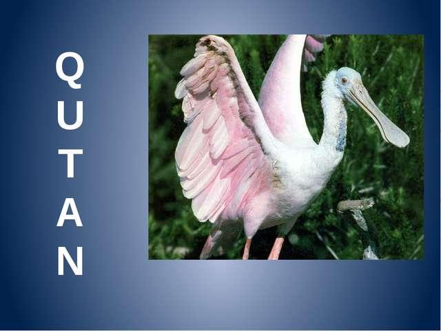 Q U T A N