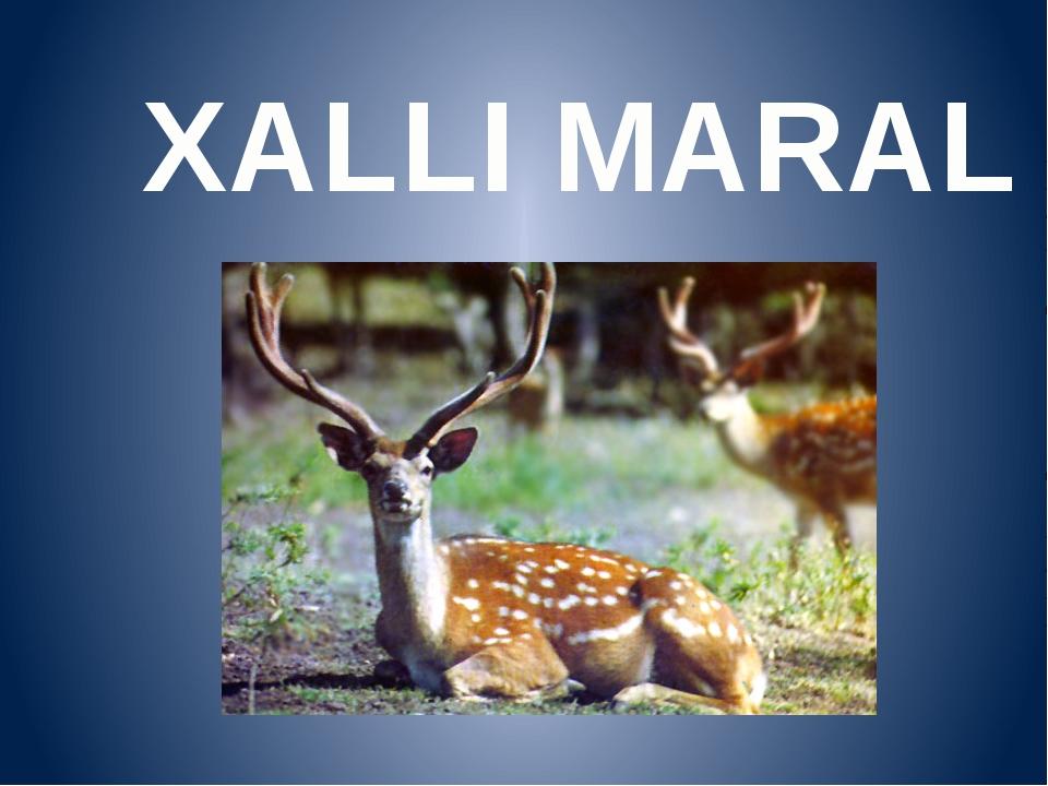 XALLI MARAL