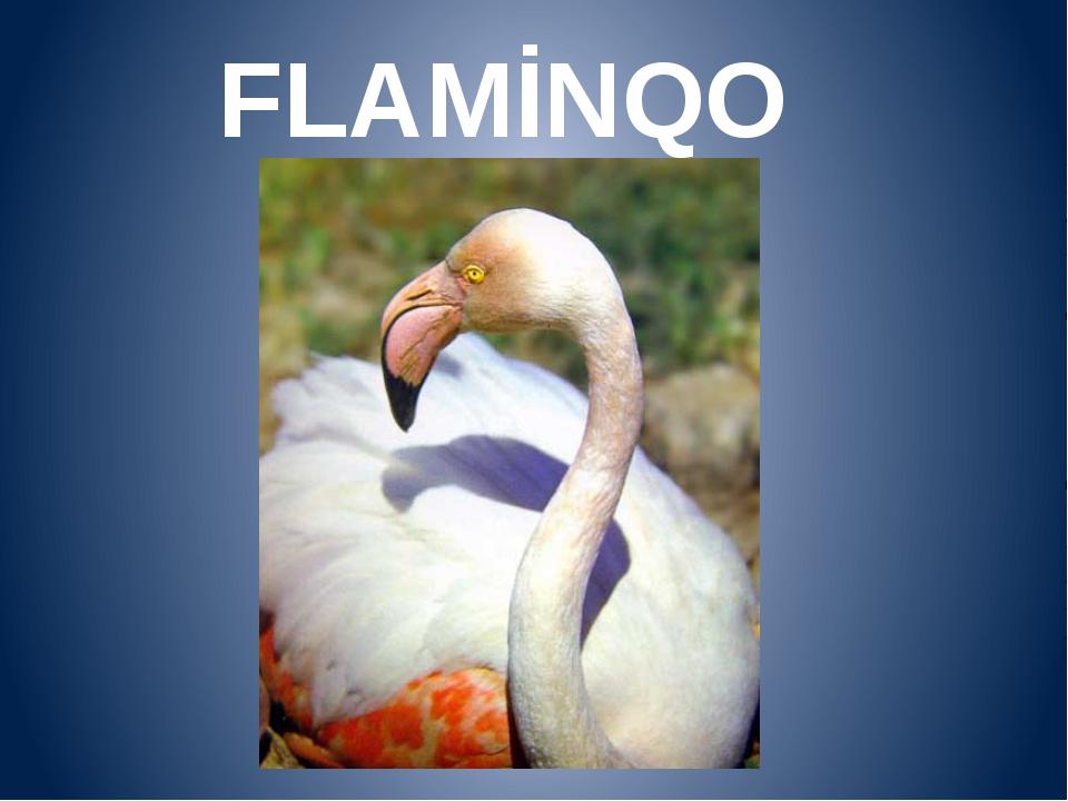 FLAMİNQO