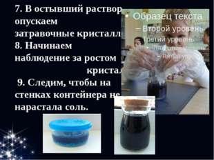 7. В остывший раствор опускаем затравочные кристаллы. 8. Начинаем наблюдение