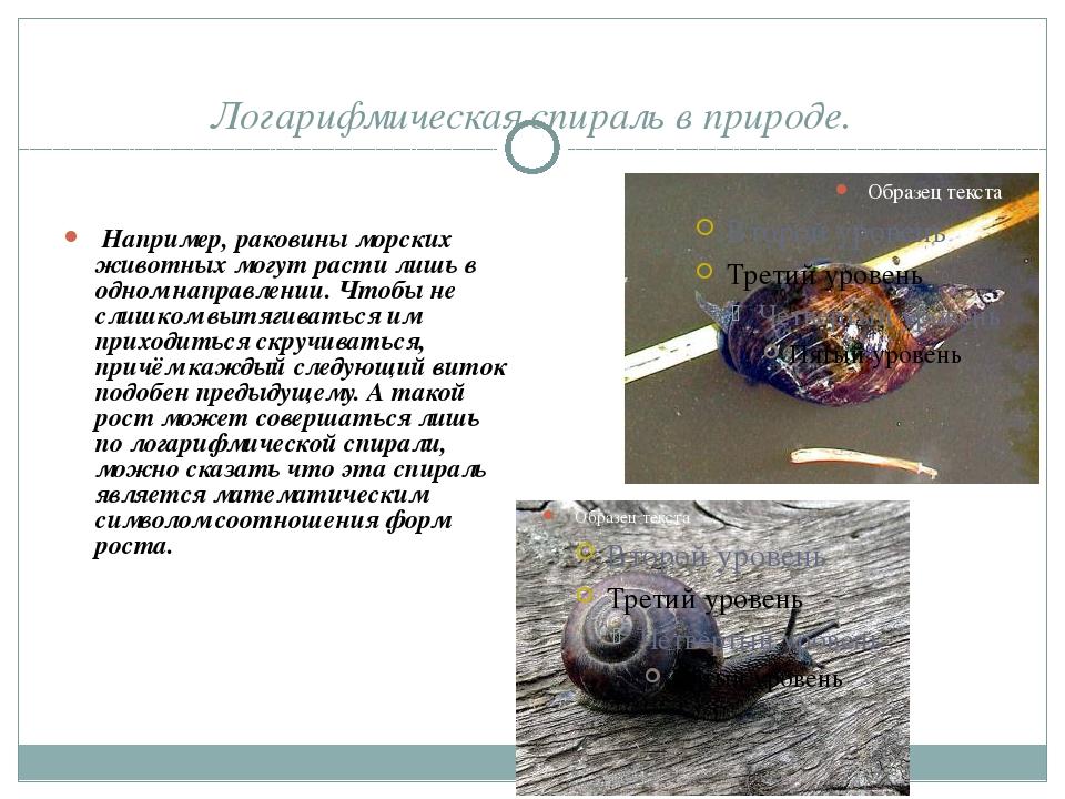 Логарифмическая спираль в природе. Например, раковины морских животных могут...