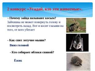 2 конкурс «Угадай, кто эти животные». - Почему зайца называют косым? Зайчишка