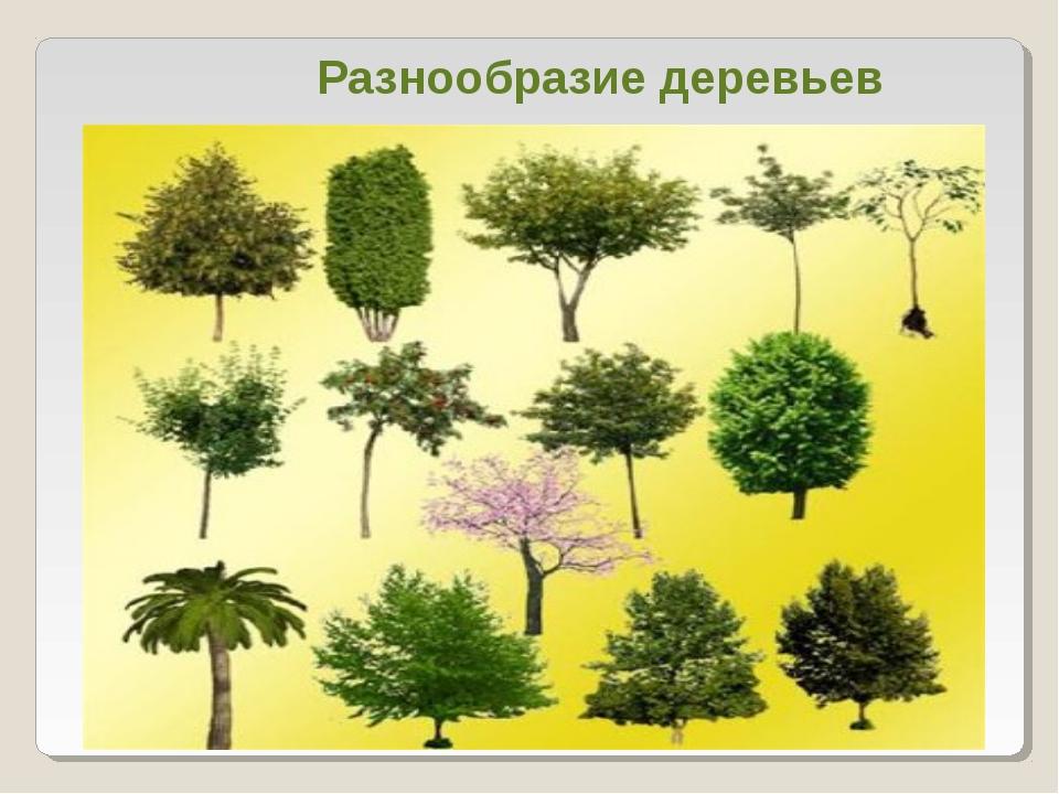 Разнообразие деревьев
