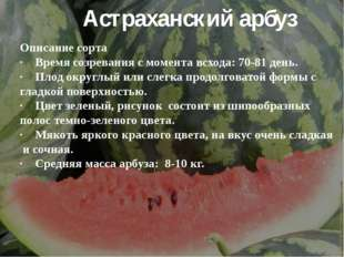 Астраханский арбуз Описание сорта ·Время созревания с момента всхода: 70-81