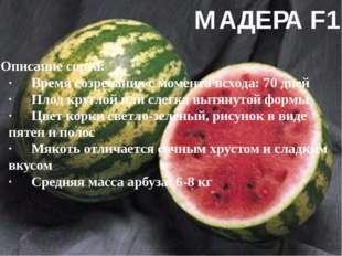 МАДЕРА F1 Описание сорта: ·Время созревания с момента всхода: 70 дней ·Плод