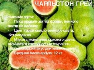 ЧАРЛЬСТОН ГРЕЙ Описание сорта: ·Плод продолговатой формы, немного похож на к