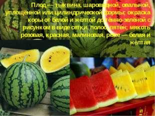 Плод — тыквина, шаровидной, овальной, уплощённой или цилиндрической формы; ок
