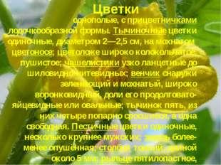 однополые, с прицветничками лодочкообразной формы. Тычиночные цветки одиночны
