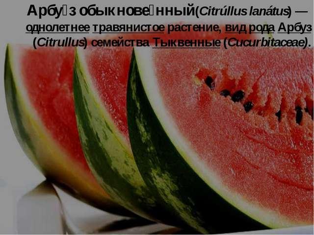 Арбу́з обыкнове́нный(Citrúllus lanátus) — однолетнее травянистое растение, ви...