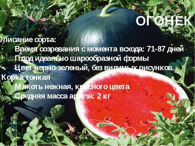 ОГОНЕК Описание сорта: ·Время созревания с момента всхода: 71-87 дней ·Плод...